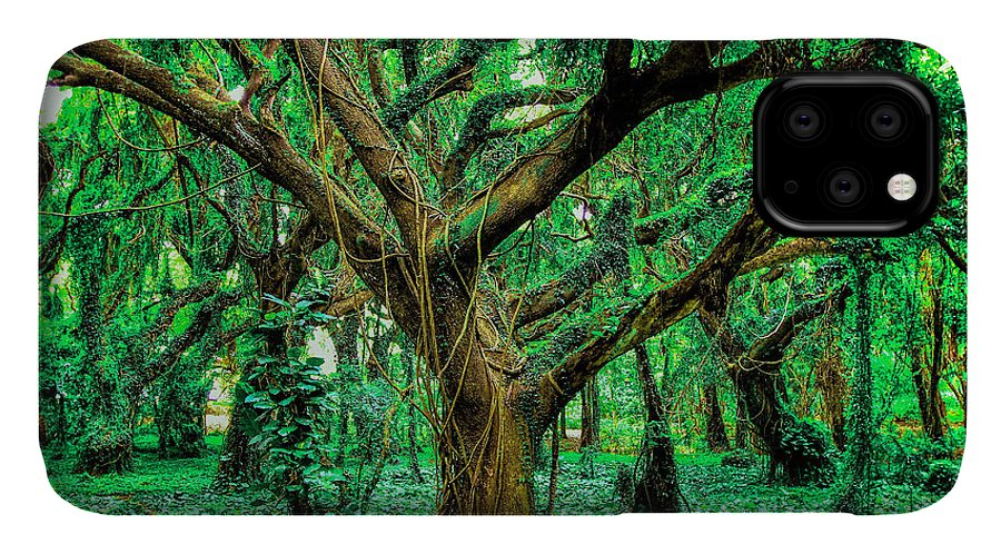 Funny IPhone 11 Case featuring the photograph Maui Tree by Robert Aycock