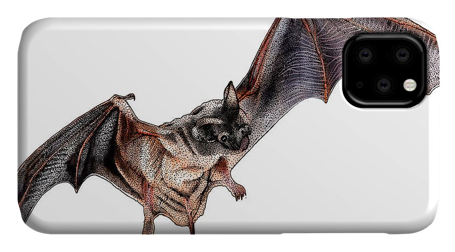 Illustration IPhone 11 Case featuring the photograph Mexican Free-tailed Bat by Roger Hall