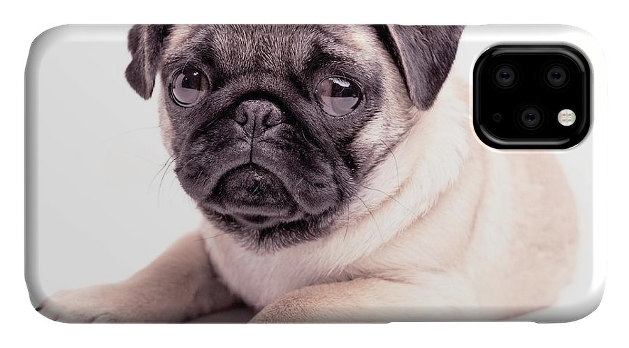 Pug IPhone Case featuring the photograph Miss You by Edward Fielding