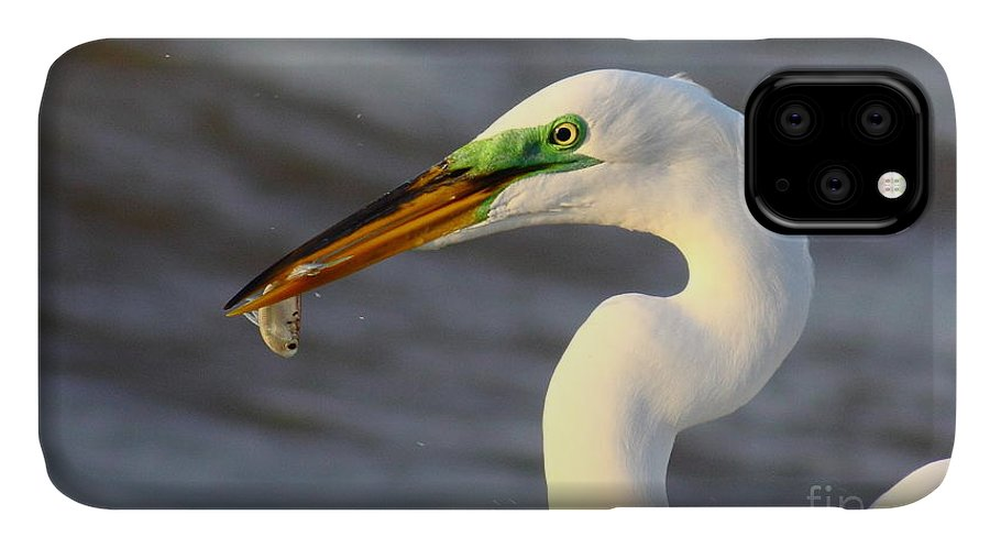 Animal IPhone Case featuring the photograph Morning's Catch by Robert Frederick