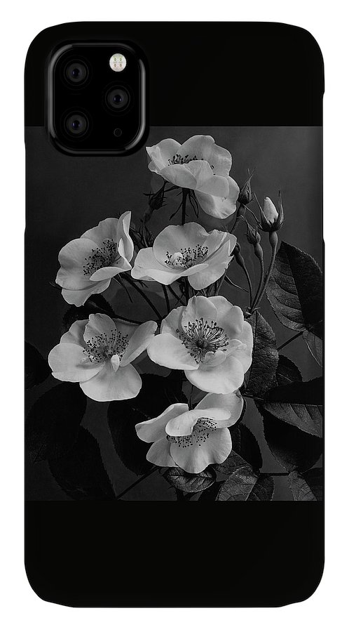 Flowers IPhone 11 Case featuring the photograph Moschata Alba by J. Horace McFarland