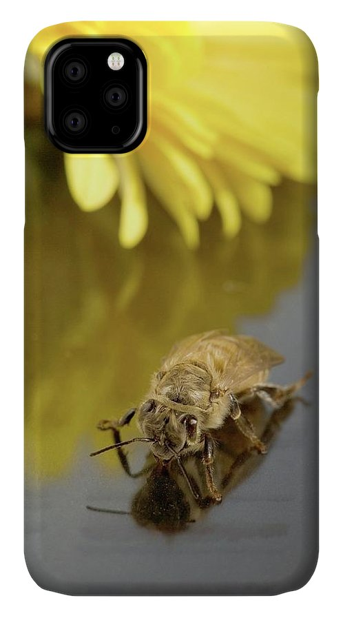 Honey Bee IPhone Case featuring the photograph Newly Emerged Honey Bee by Peggy Greb/us Department Of Agriculture