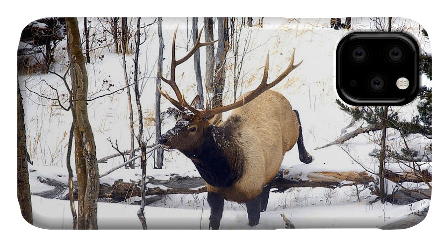 Elk IPhone Case featuring the photograph On the Move by Mike Dawson