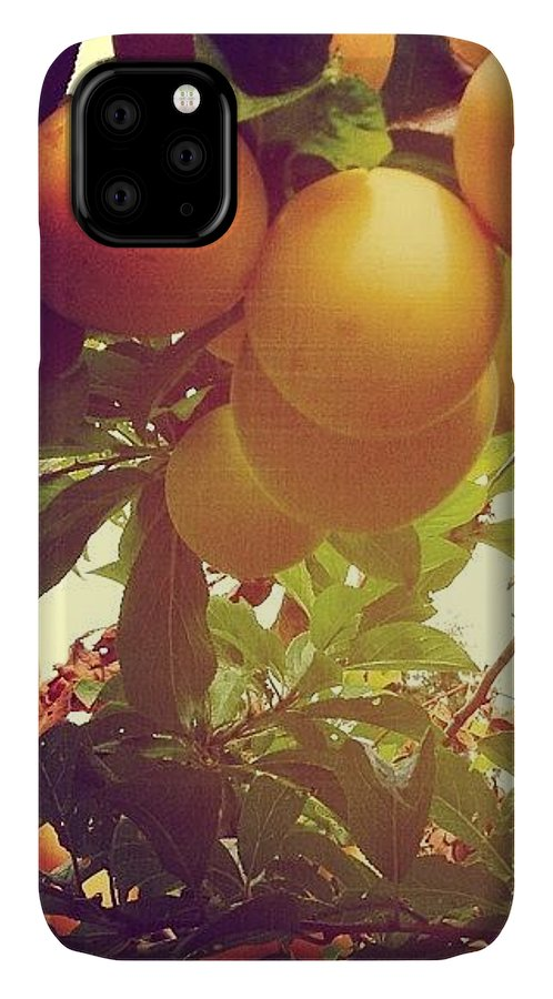 Plums IPhone Case featuring the photograph Our Plum Tree Is Loaded This Year...any by Blenda Studio