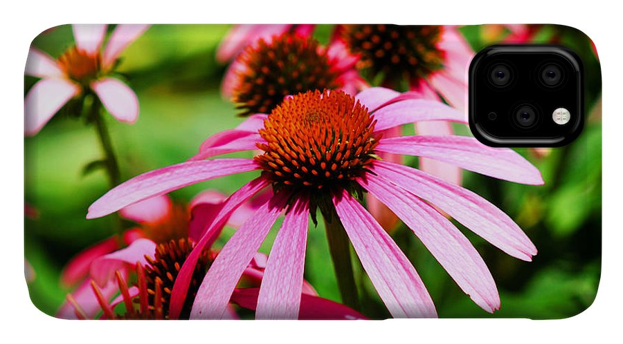 Pink IPhone Case featuring the photograph Pink Beauty by Marty Gayler