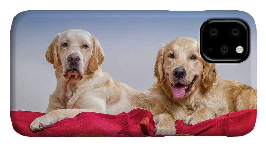 Photography IPhone 11 Case featuring the photograph Portrait Of A Golden Retriever by Animal Images