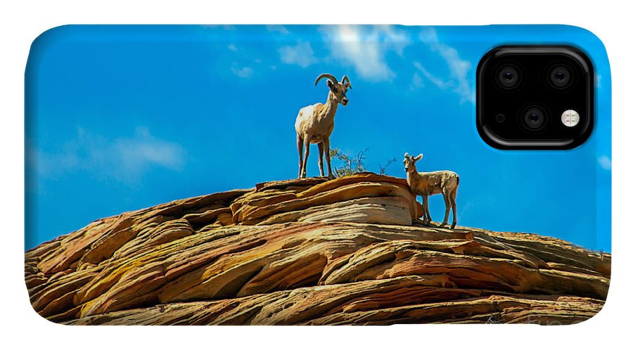 Bighorn Sheep IPhone Case featuring the photograph Queen Ewe by Robert Bales