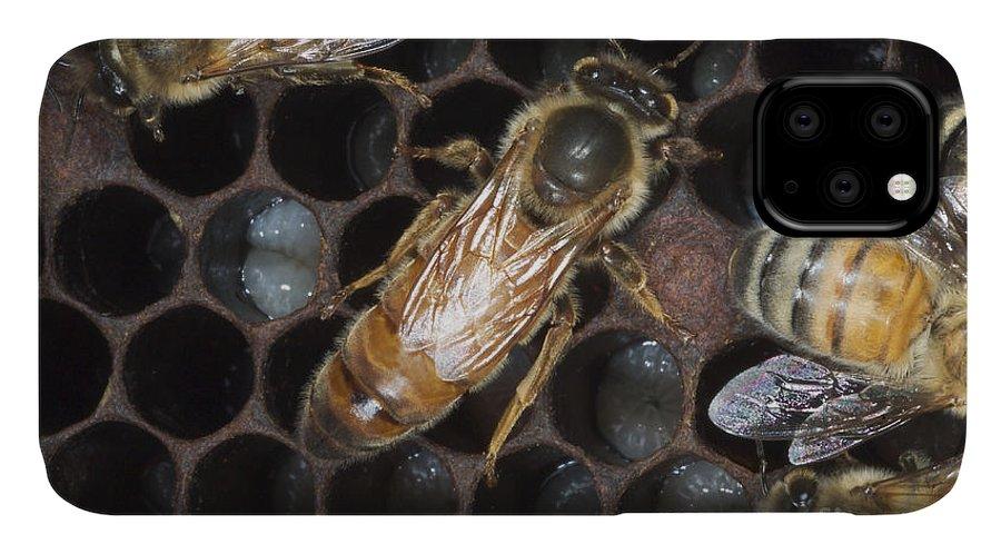 Animal IPhone Case featuring the photograph Queen Honeybee by Scott Camazine