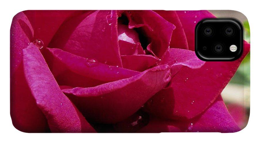 Red IPhone 11 Case featuring the photograph Red Rose Up Close by Thomas Woolworth