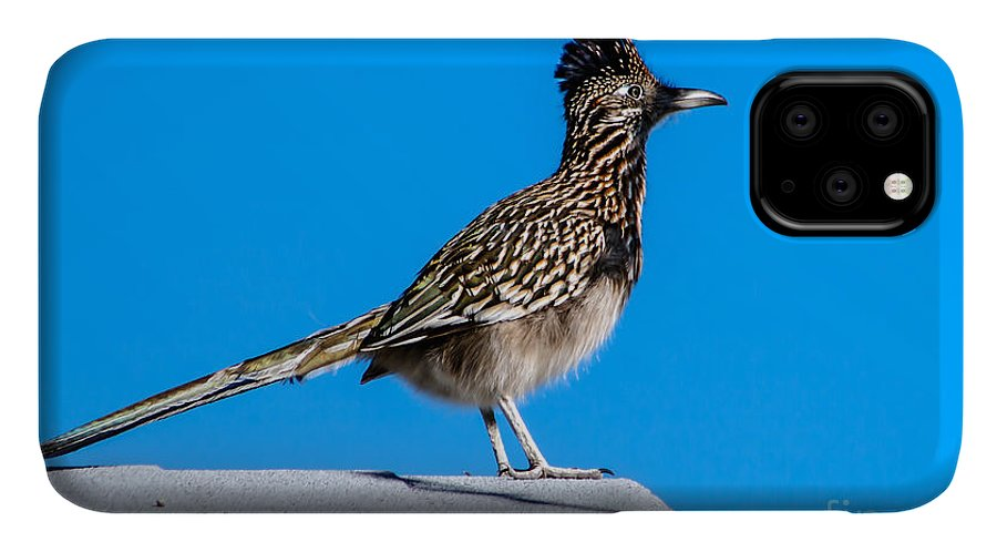 Greater Roadrunner IPhone 11 Case featuring the photograph Roadrunner by Robert Bales