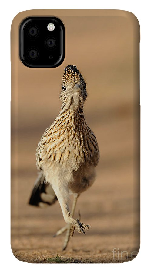 Greater Roadrunner IPhone 11 Case featuring the photograph Roadrunner Running by Scott Linstead