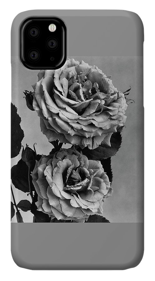 Flowers IPhone 11 Case featuring the photograph Roses by J. Horace McFarland