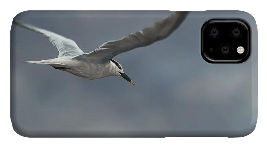 Bird IPhone Case featuring the digital art Sandwich Tern by Aaron Blaise