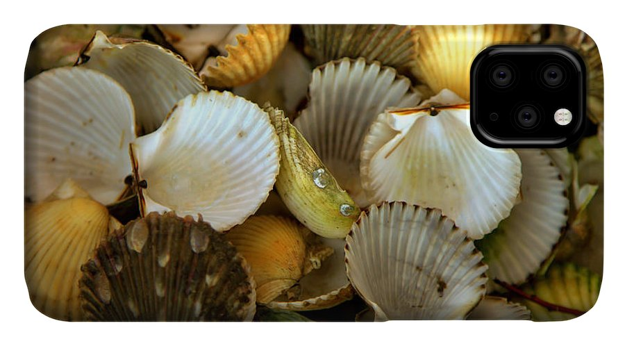 Seashells IPhone Case featuring the photograph Sea Treasures by Karen Wiles