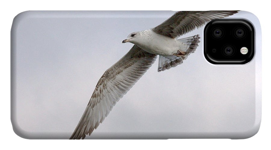 Roy Williams IPhone Case featuring the photograph Seagull Soaring Under Pale Blue Sky by Roy Williams