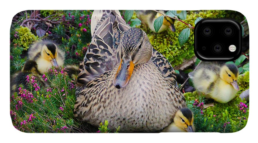 Duck IPhone Case featuring the photograph Sitting Pretty by Jasna Buncic