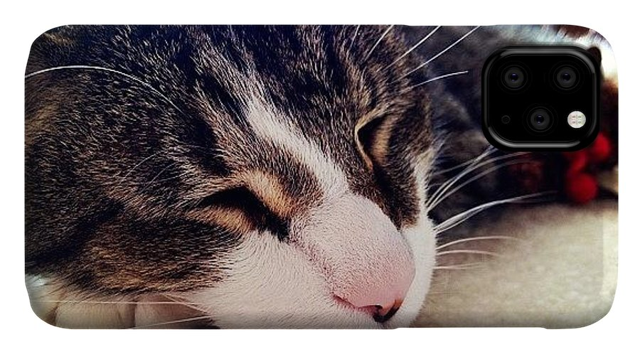 Cat IPhone Case featuring the photograph Sleeping by Mike Maher