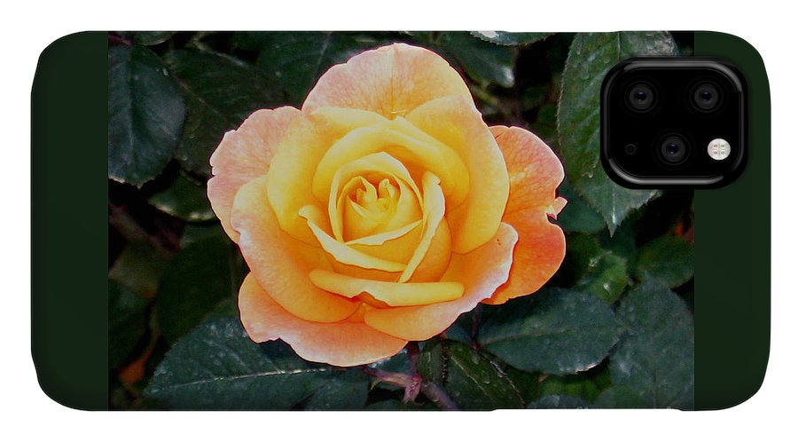 Photographic Print IPhone Case featuring the photograph Strike It Rich Rose by Marian Bell