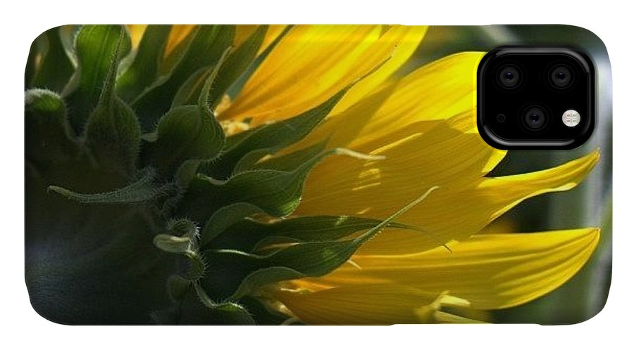 Love IPhone 11 Case featuring the photograph #sunflower #closeup by Georgia Fowler