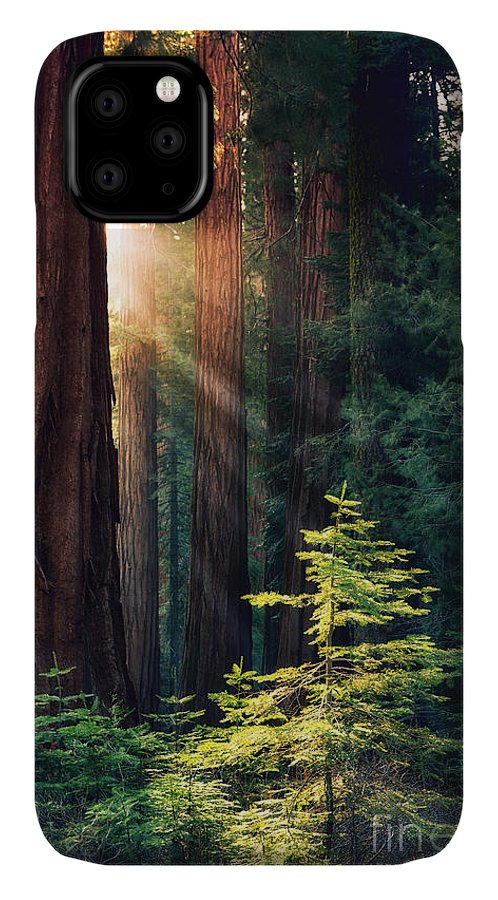 Redwood IPhone 11 Case featuring the photograph Sunlit From Heaven by Jane Rix