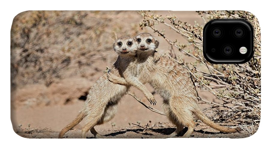 Africa IPhone 11 Case featuring the photograph Suricates At Play by Tony Camacho