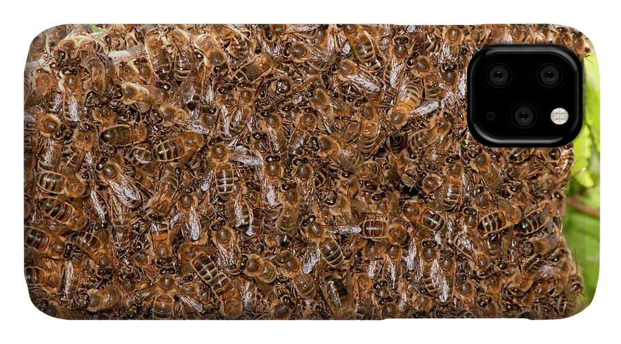Animal IPhone Case featuring the photograph Swarm Of Honey Bees by Dr. John Brackenbury