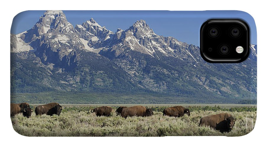 Bison IPhone 11 Case featuring the photograph The Boys Club Of Grand Teton by Sandra Bronstein