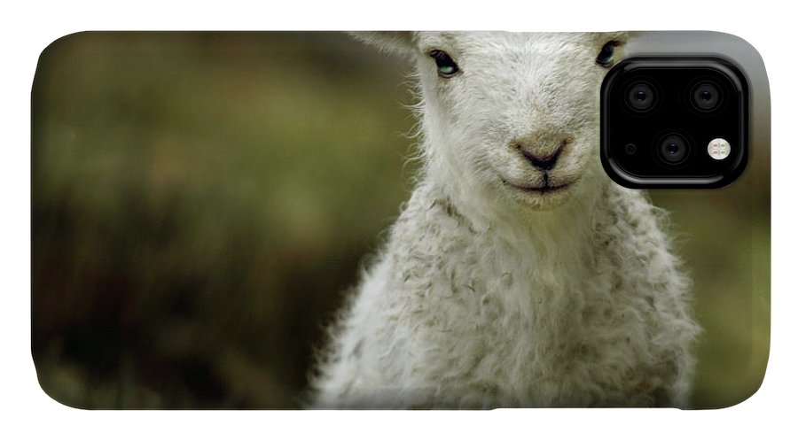 Wales IPhone 11 Case featuring the photograph The Lamb by Angel Ciesniarska