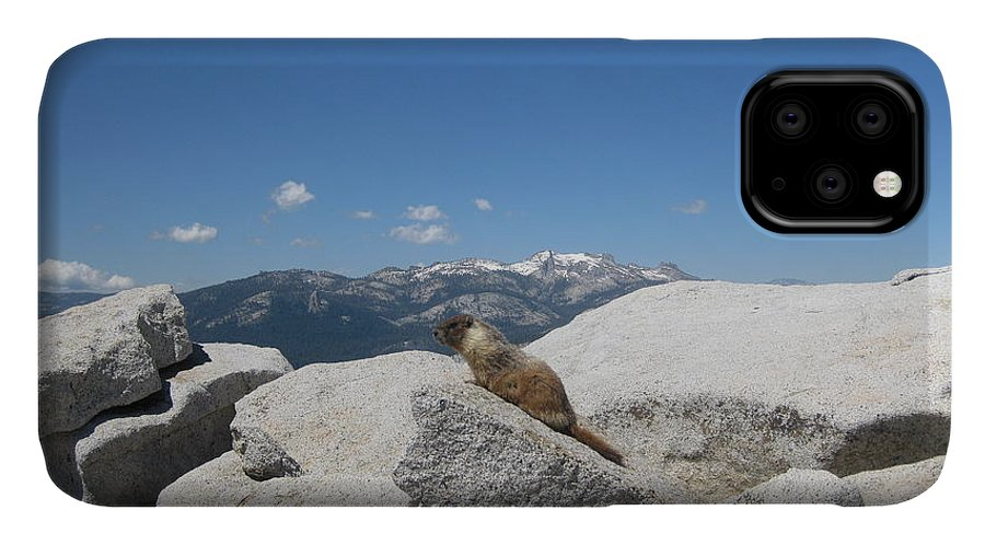 Half Dome IPhone Case featuring the photograph The Resident of Half Dome by AC Hamilton
