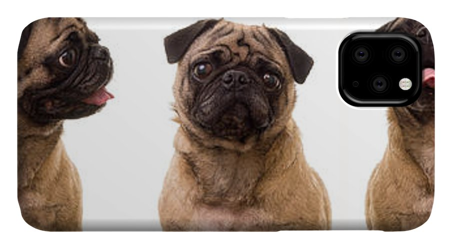 Pug IPhone Case featuring the photograph The Usual Suspects by Edward Fielding
