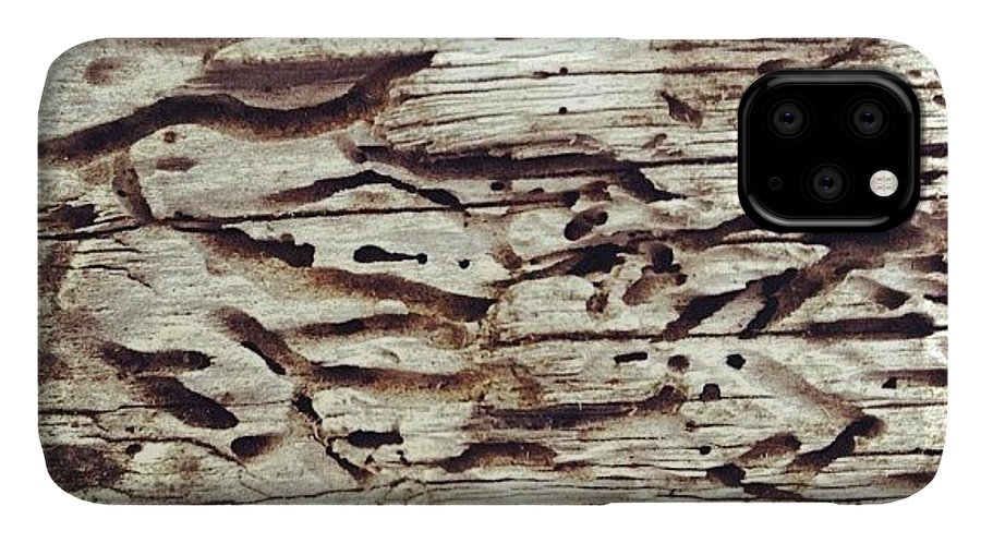 Icnature IPhone 11 Case featuring the photograph Tree At Sea #nicsquirrell #nature #wood by Nic Squirrell