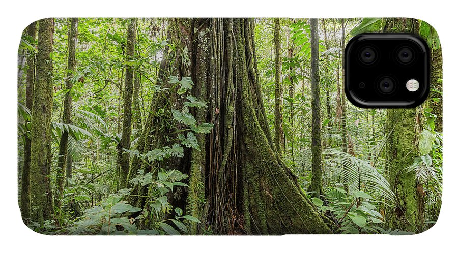 Plant IPhone Case featuring the photograph Tree With Buttress Roots by Dr Morley Read