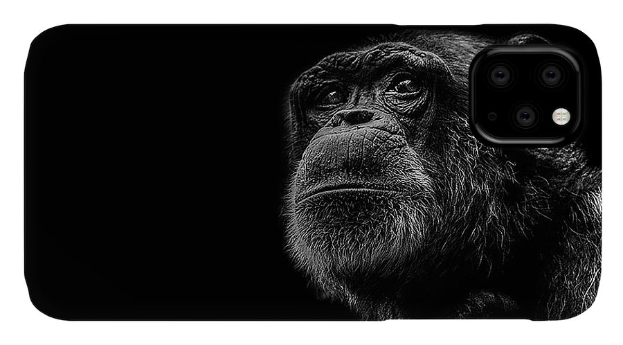 Chimpanzee IPhone Case featuring the photograph Trepidation by Paul Neville