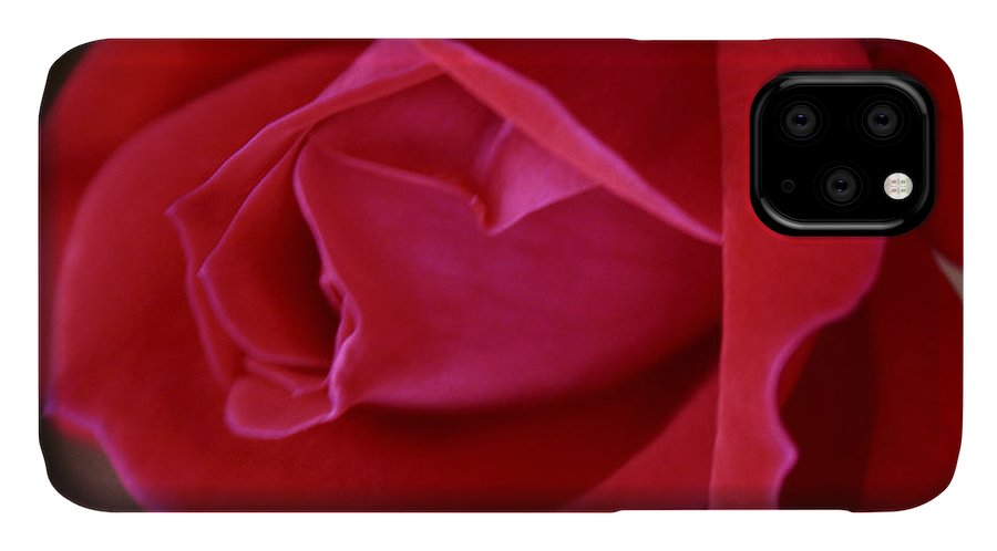 Rose IPhone Case featuring the photograph Unfolding Glory by Mary Beglau Wykes