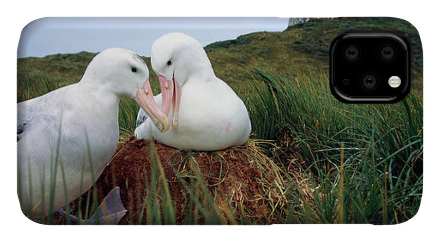 Photography IPhone Case featuring the photograph Wandering Albatross Diomedea Exulans by Animal Images
