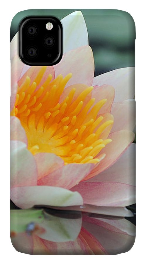 Lily IPhone Case featuring the photograph water lily 45 Water Lily with Reflection by Terri Winkler