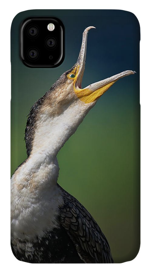 Cormorant IPhone 11 Case featuring the photograph Whitebreasted Cormorant by Johan Swanepoel