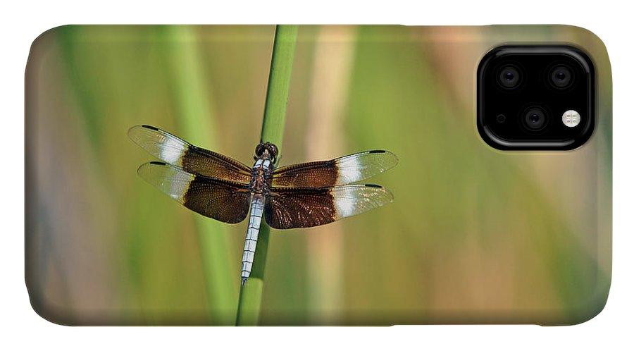 Widow Skimmer IPhone Case featuring the photograph Basking Widow Skimmer by Bill Morgenstern