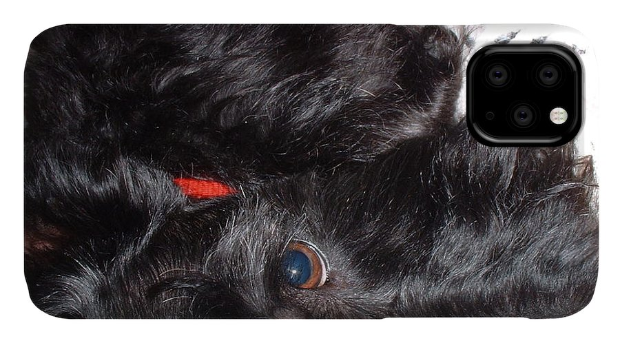 Scotty IPhone Case featuring the photograph You Again by Mark Robbins