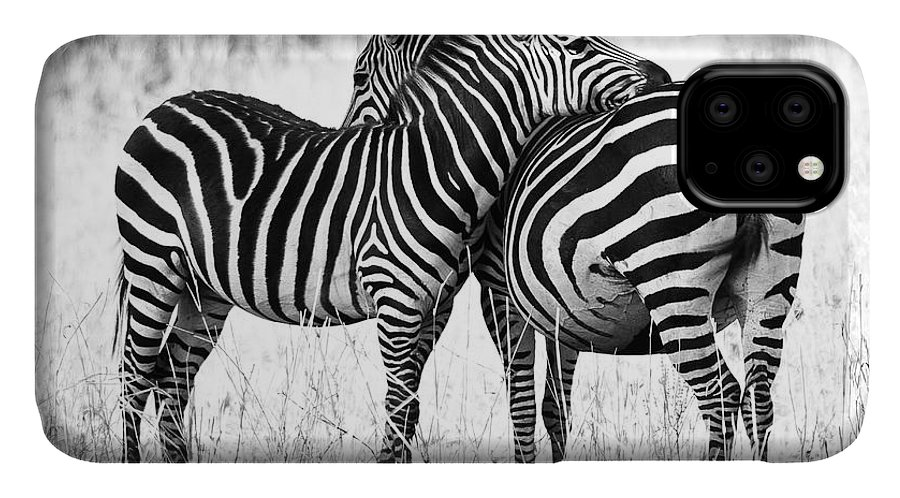 3scape IPhone 11 Case featuring the photograph Zebra Love by Adam Romanowicz