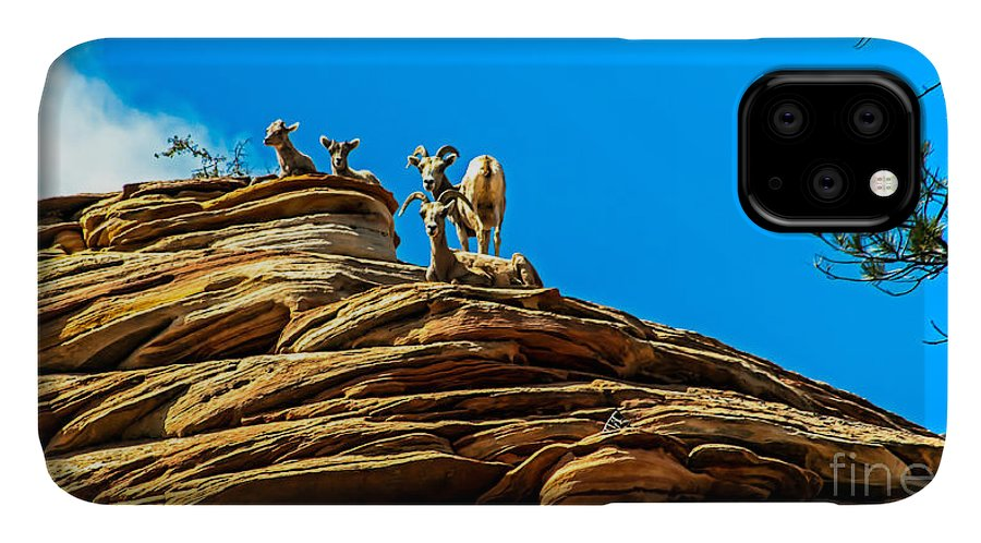 Bighorn Sheep IPhone Case featuring the photograph Zion Bighorn Sheep by Robert Bales