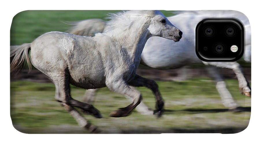 Horse IPhone Case featuring the photograph Family by Karen Ulvestad