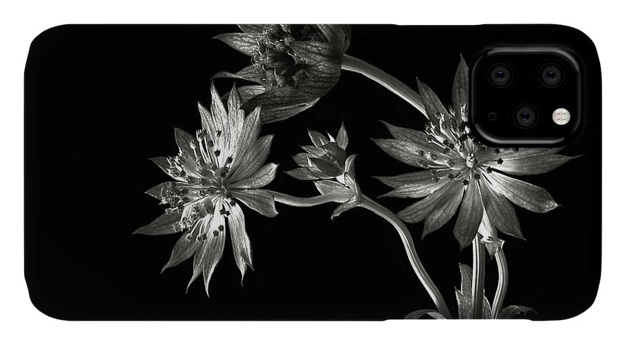 Flower IPhone Case featuring the photograph Astrantia In Black And White by Endre Balogh
