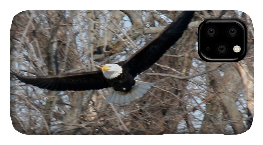 Bald Eagle IPhone Case featuring the photograph Bald Eagle At Full Wingspan by Crystal Heitzman Renskers