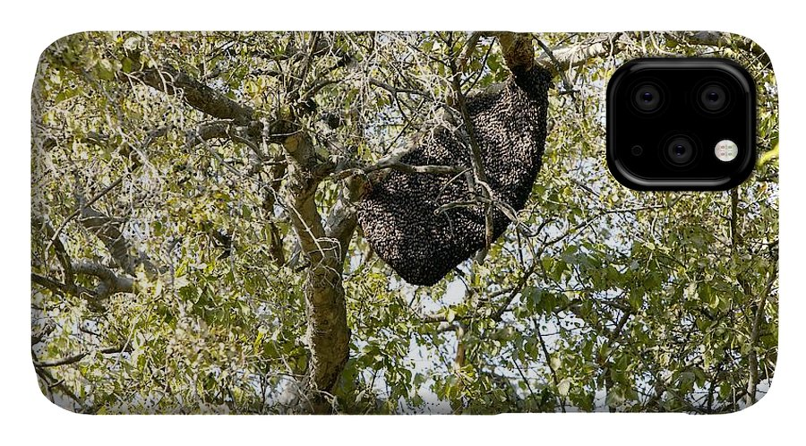 Animal IPhone Case featuring the photograph Bee Hive In A Tree by Colin Cuthbert