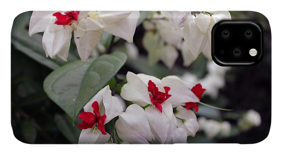 Flowers IPhone Case featuring the photograph Bleeding Hearts by Deborah Hughes