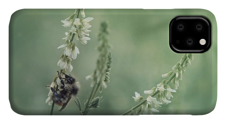 Sweet Clover IPhone Case featuring the photograph Collecting The Summer by Priska Wettstein