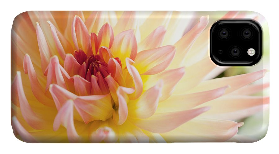 Dahlia IPhone Case featuring the photograph Dahlia Flower 01 by Nailia Schwarz
