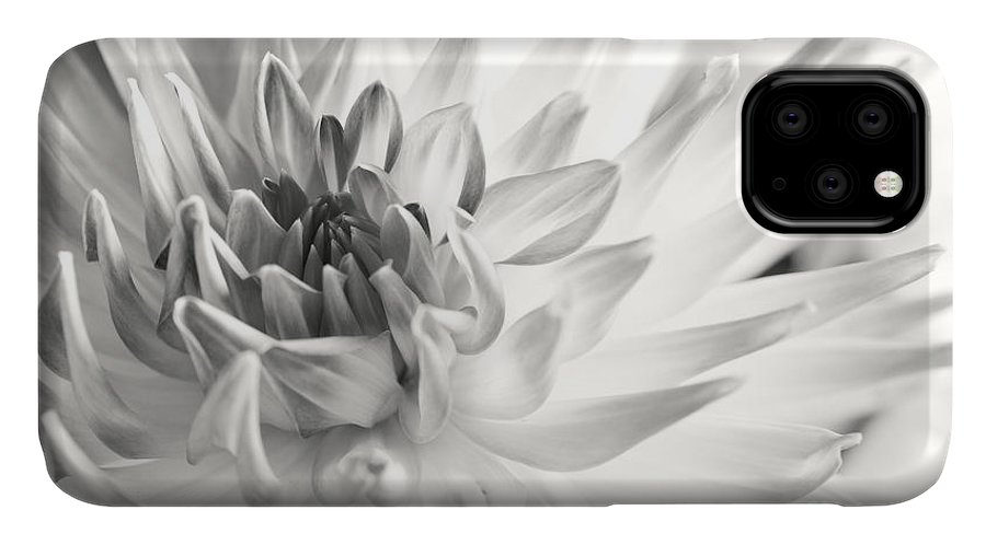 Dahlia IPhone Case featuring the photograph Dahlia Flower 02 by Nailia Schwarz