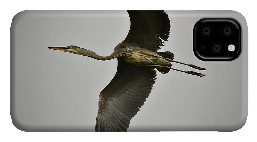 Great Blue Heron IPhone 11 Case featuring the photograph Flight Of The Great Blue Heron by Saija Lehtonen